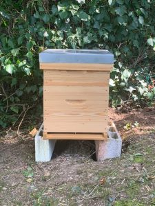bee-hive_in_place
